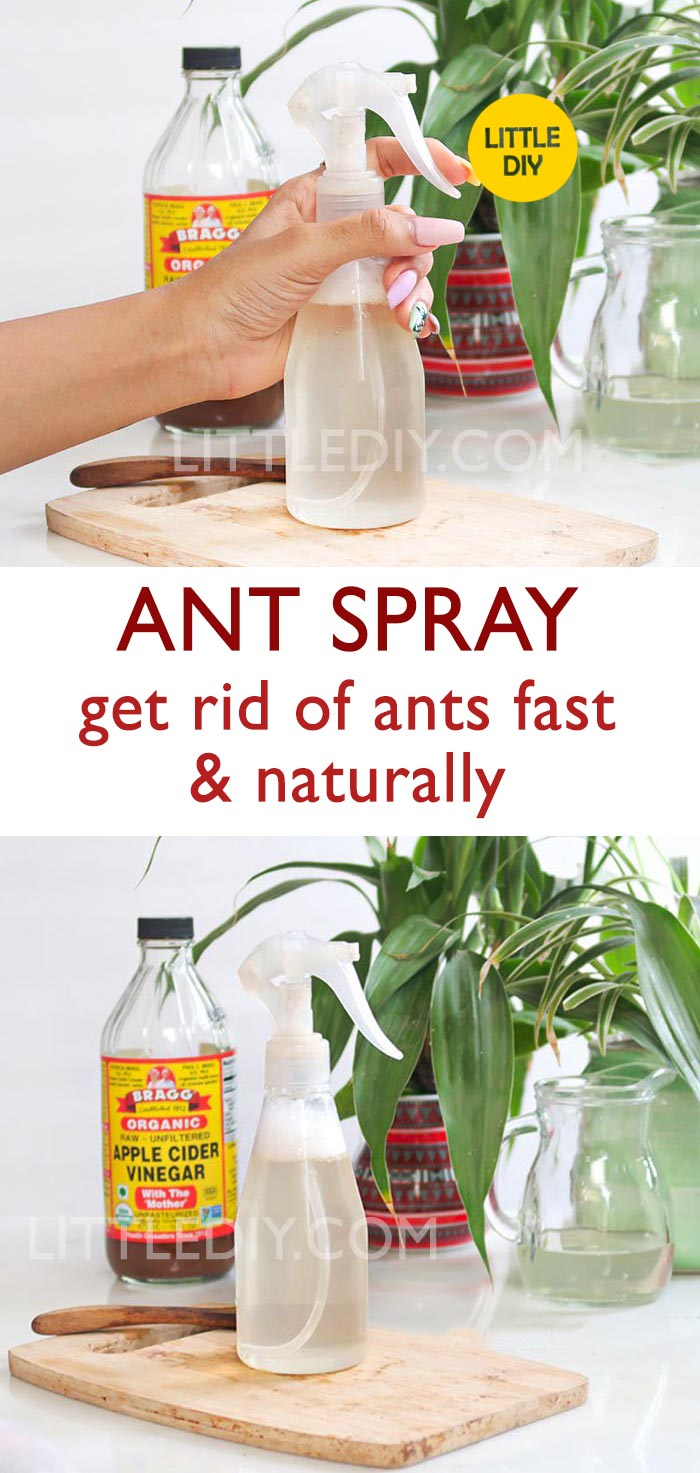 Photo of ANT SPRAY – get rid of ants fast and naturally