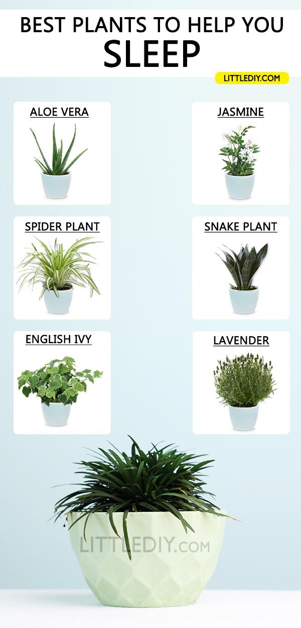 Photo of BEST PLANTS FOR SLEEP + DIY SLEEP SPRAY